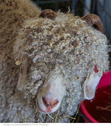 animal textile fiber