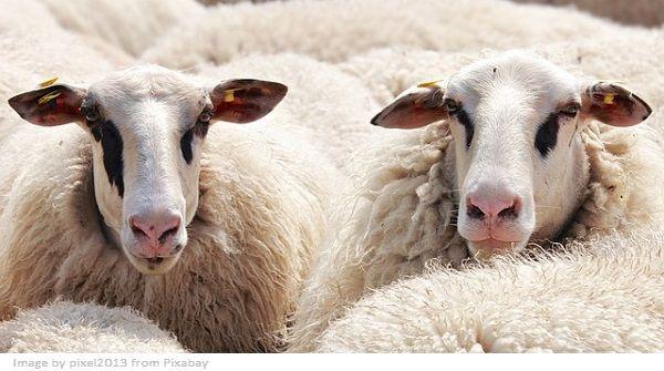 animal fiber textiles