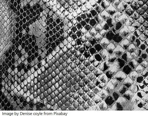 snake animal prints